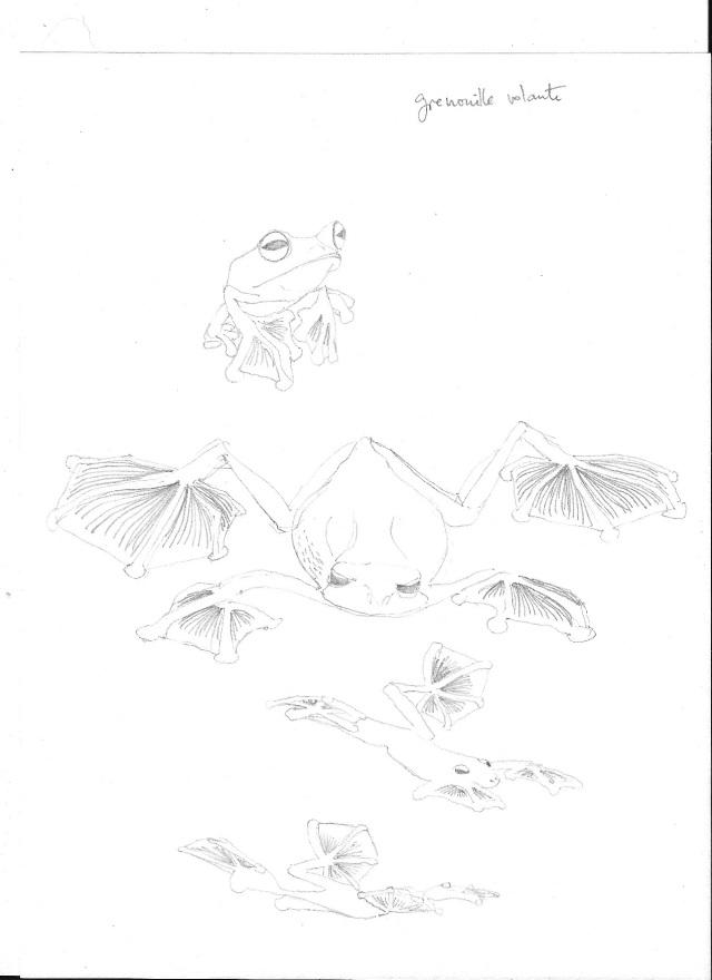 grenouille volante